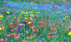 Landscape photo of wildflowers